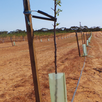 Agriculture & Vine Tree Guards